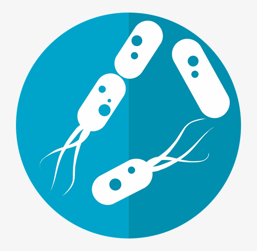 Bacteria Png Hd.