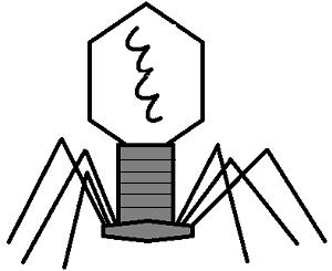 Viruses (notes).