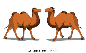 Bactrian camel Clipart and Stock Illustrations. 119 Bactrian camel.