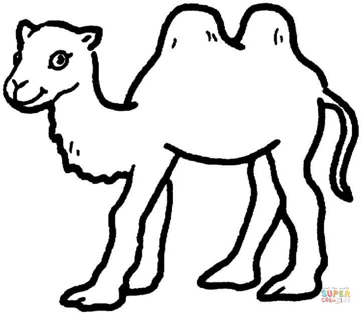 Camels coloring pages.