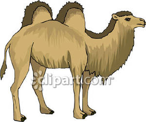 Bactrian camel clipart.