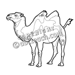 Clip Art: Bactrian Camel B&W.