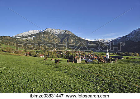 "Picture of ""Cows standing on a pasture, town of Bad Hindelang with."