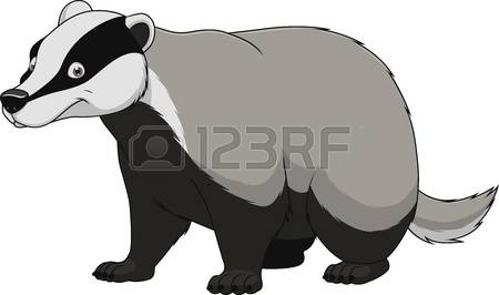 976 Badger Stock Vector Illustration And Royalty Free Badger Clipart.