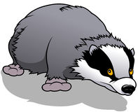 Cartoon Badger Stock Illustrations.