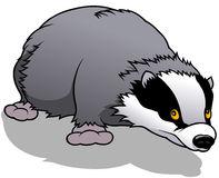 Cartoon Badger Stock Illustrations.