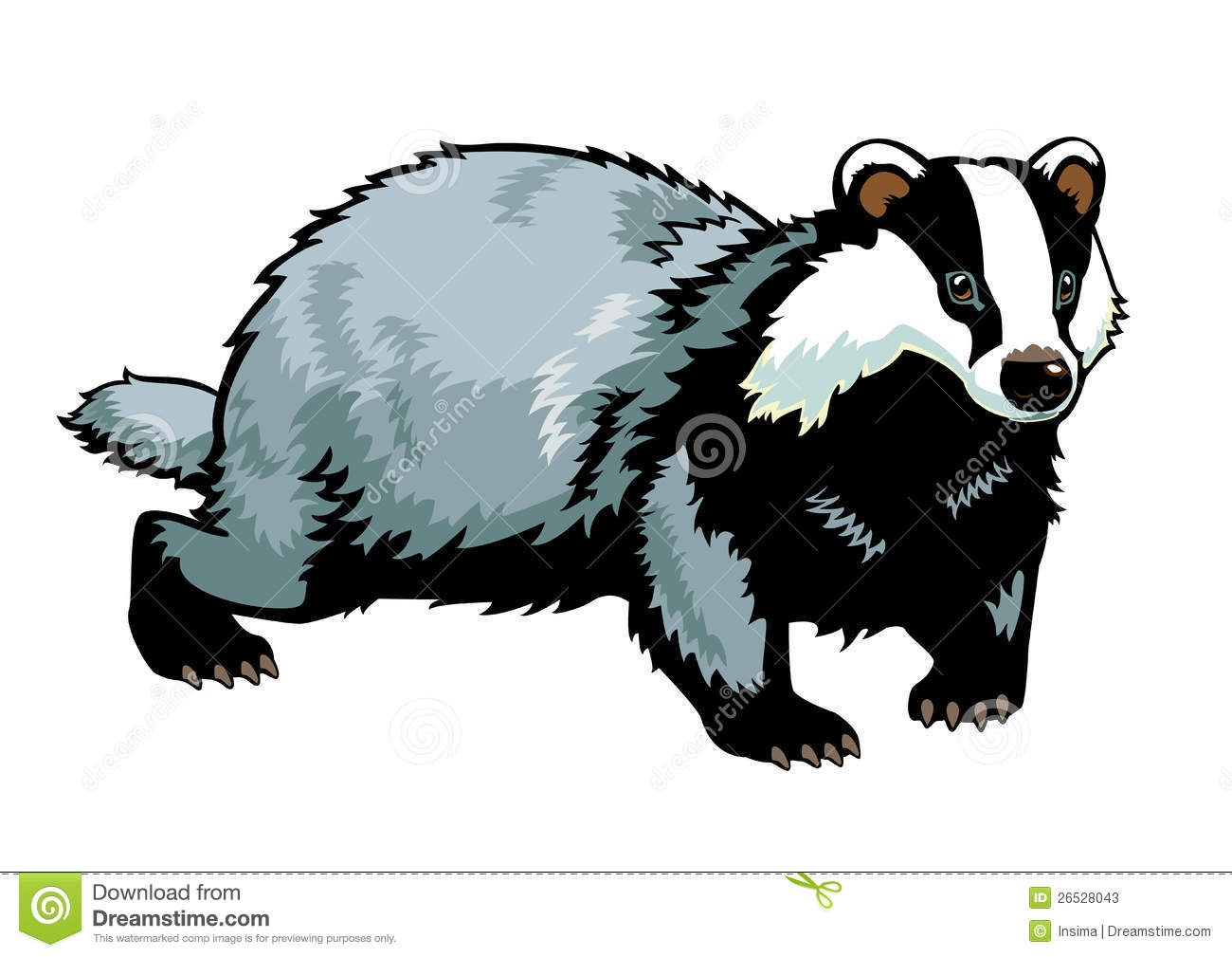 Badger Stock Illustrations.