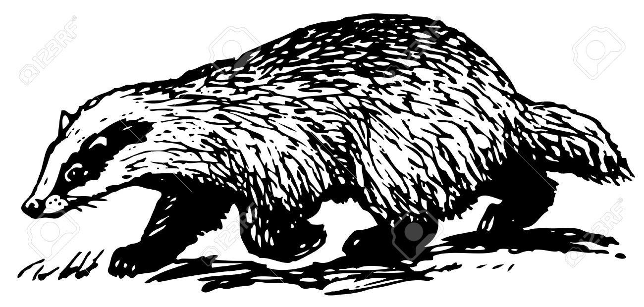 Badger clipart white background, Badger white background.