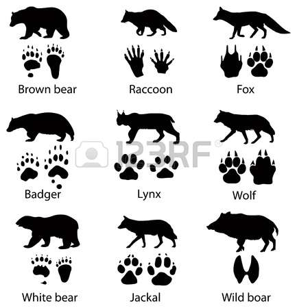975 Badger Stock Vector Illustration And Royalty Free Badger Clipart.