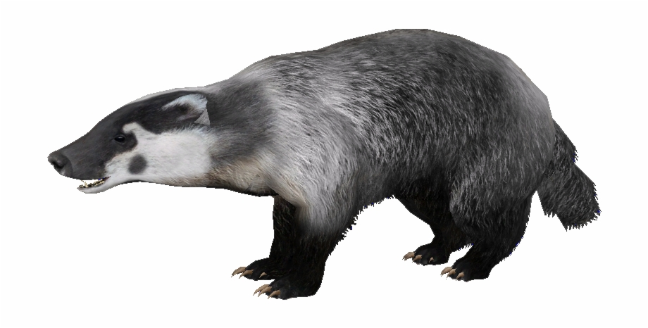 Badger Png Free PNG Images & Clipart Download #3579209.