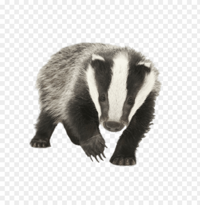 Download young badger png images background.