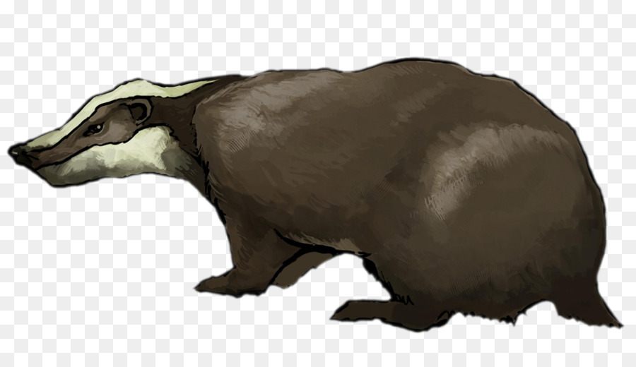 Bear Cartoon png download.