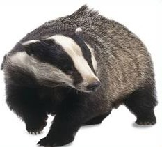 Free Badger Clipart.