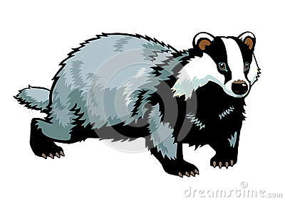 Clipart Of Badgers.