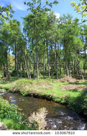 "devon Forest Path"" Stock Photos, Royalty."