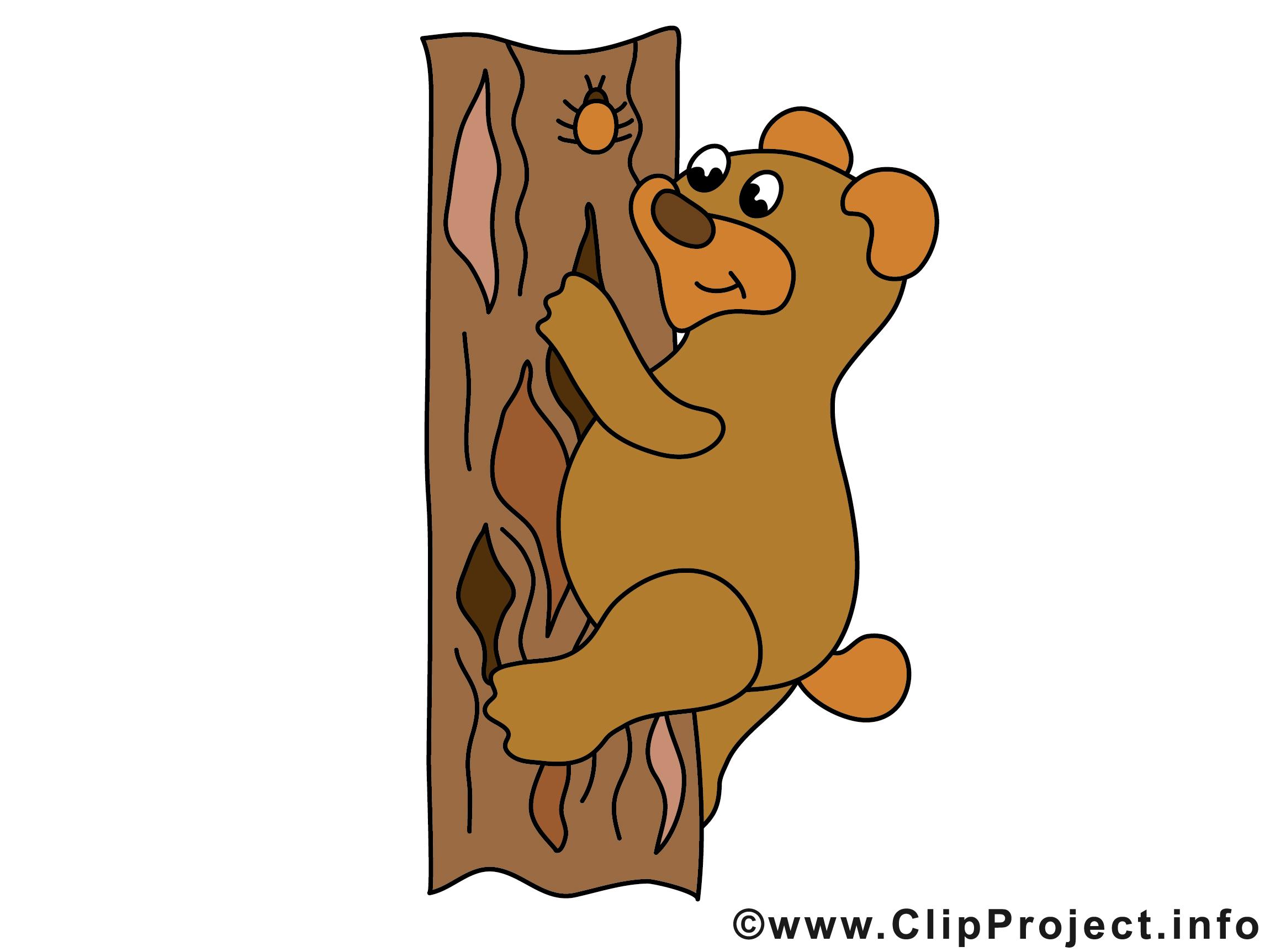 Bild Baer klettert auf Baum.