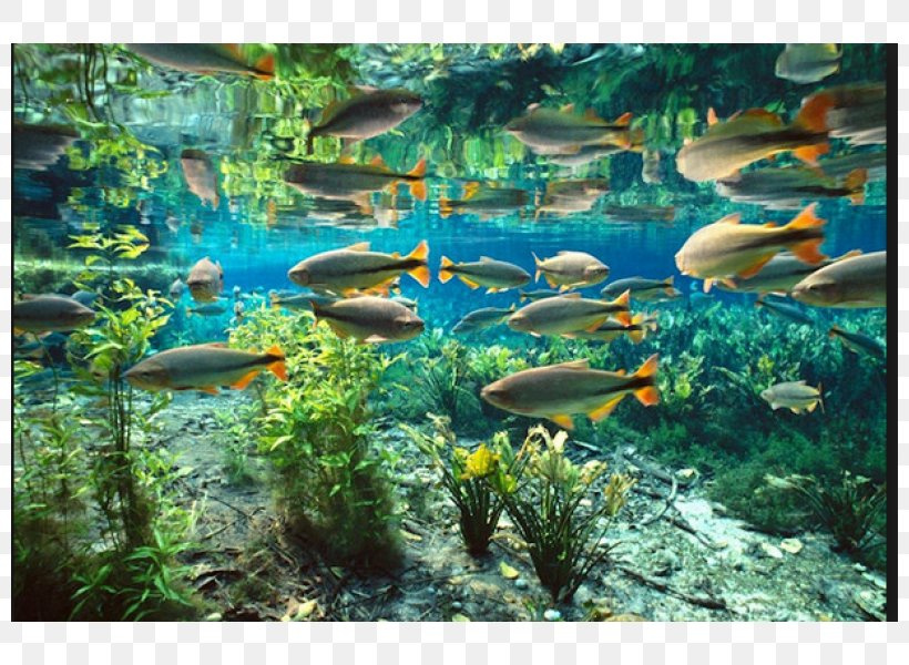 Aquario Natural Pantanal Bonito Baia Bonita Tourism, PNG.