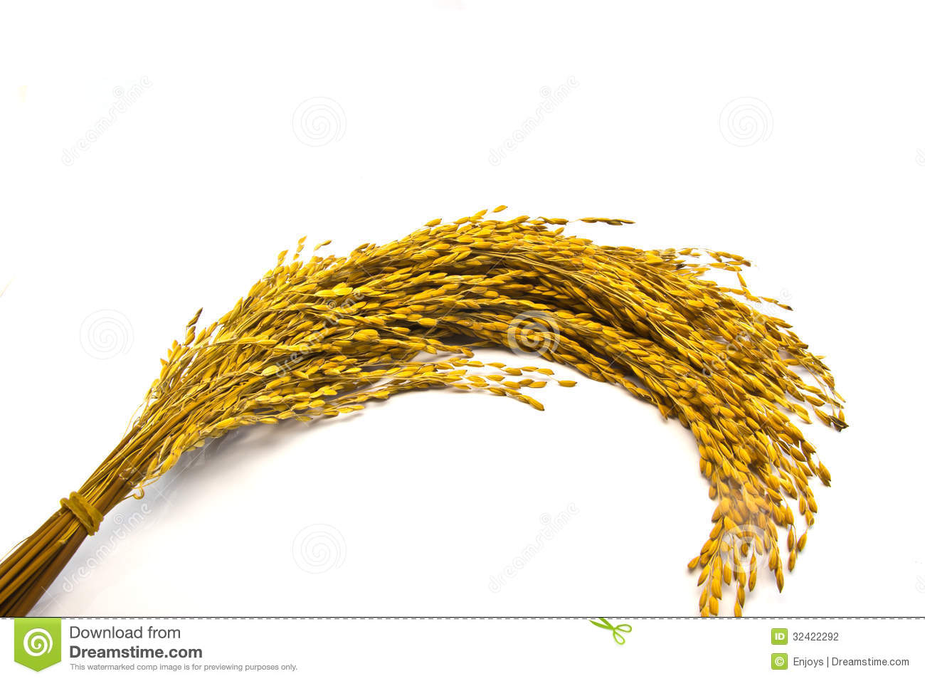 Paddy crop clipart.
