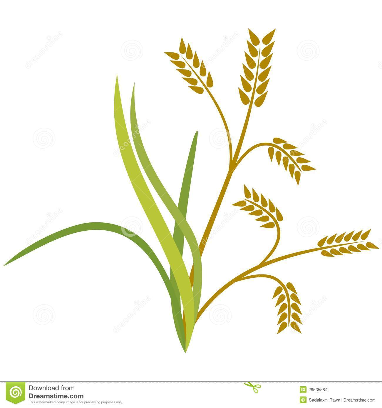 Rice crop clipart.