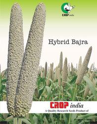 Bajra crop clipart.