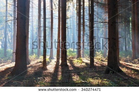 Vintage Forest Background Stock Photo 147583841.