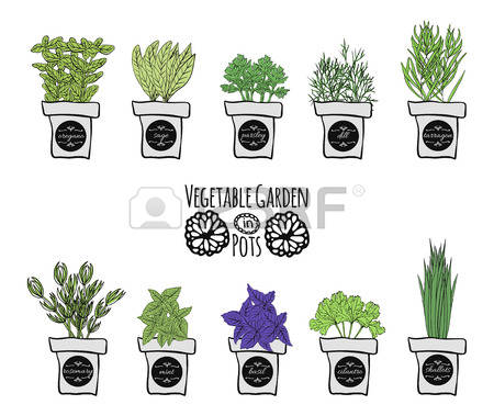 374 Balcony Plant Stock Vector Illustration And Royalty Free.