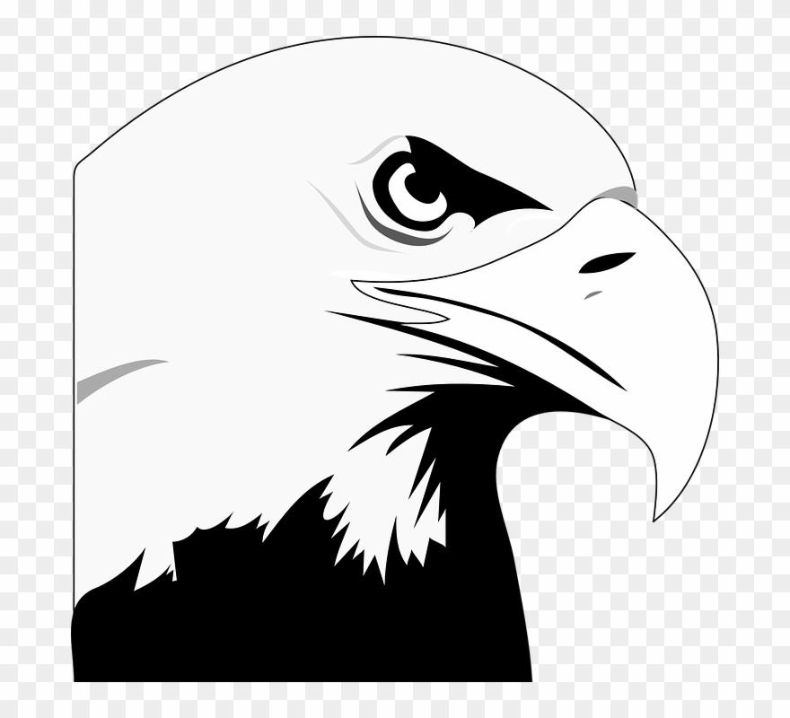 Animated Eagle.
