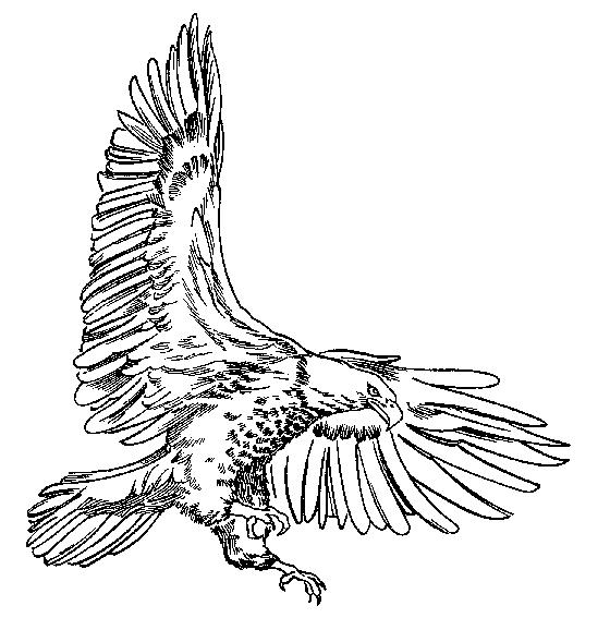 Free Bald Eagle Clip Art Black And White, Download Free Clip.
