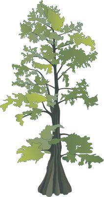 Cypress Tree Drawing.