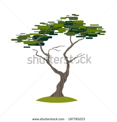 Cypress Tree Stock Photos, Royalty.