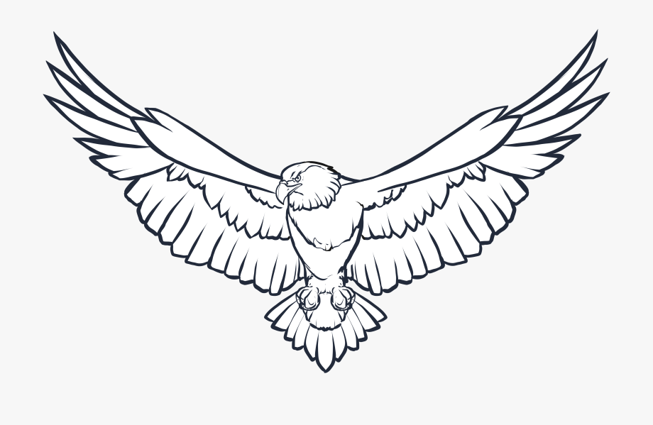 Bald Eagle Line Drawing.