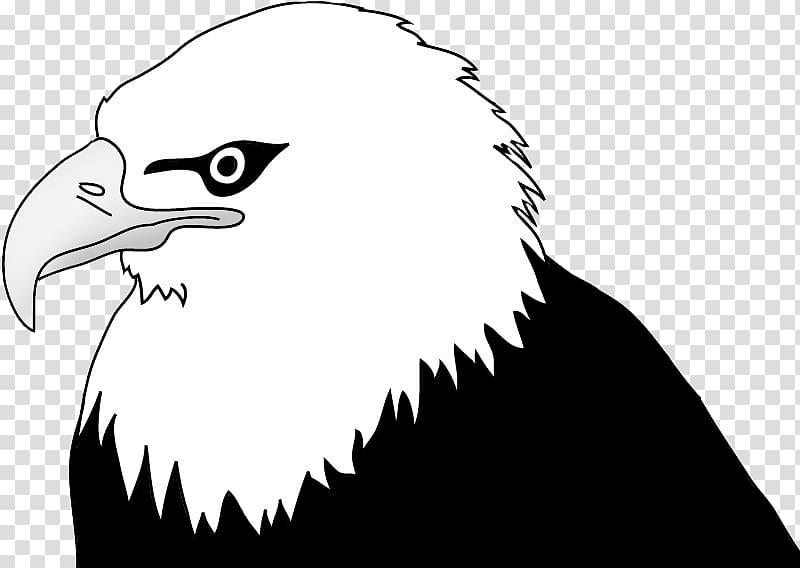 Bald Eagle Drawing , eagle transparent background PNG.