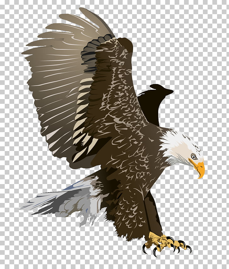 Bald Eagle Free content , Eagle Flying s PNG clipart.