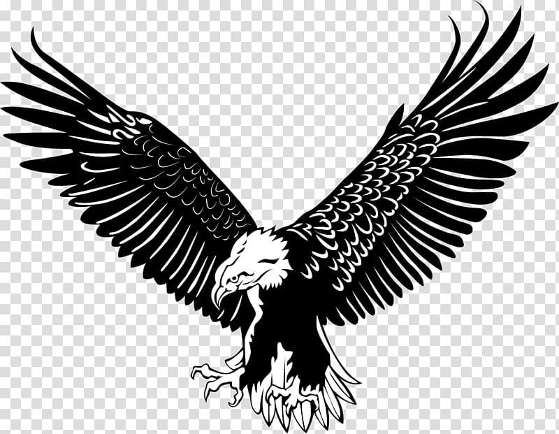 White and black eagle stencil, Bald Eagle Bird, The eagle.