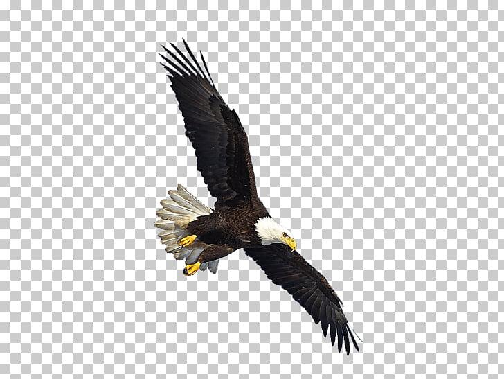 Us Eagle Flying, bald eagle PNG clipart.