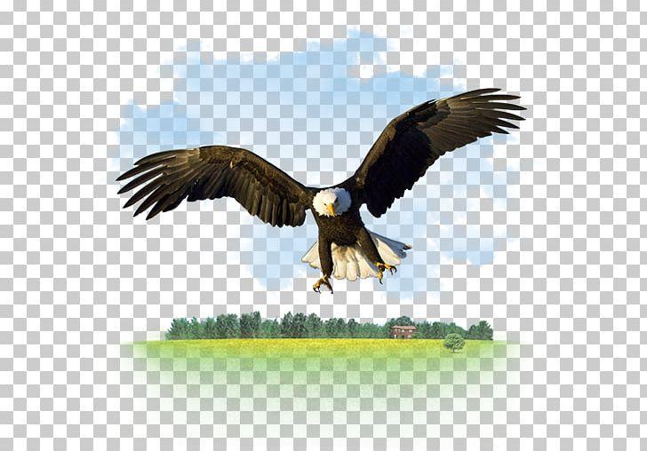 Bald Eagle Desktop High.