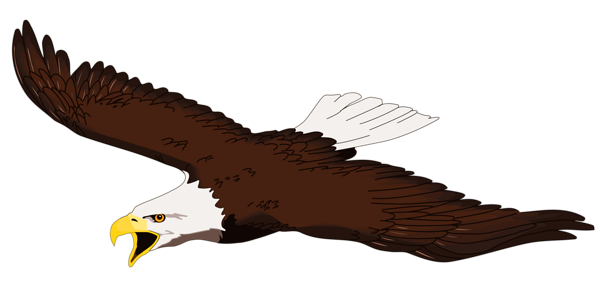 Bald eagle clip art set bald eagle clip art and eagles.