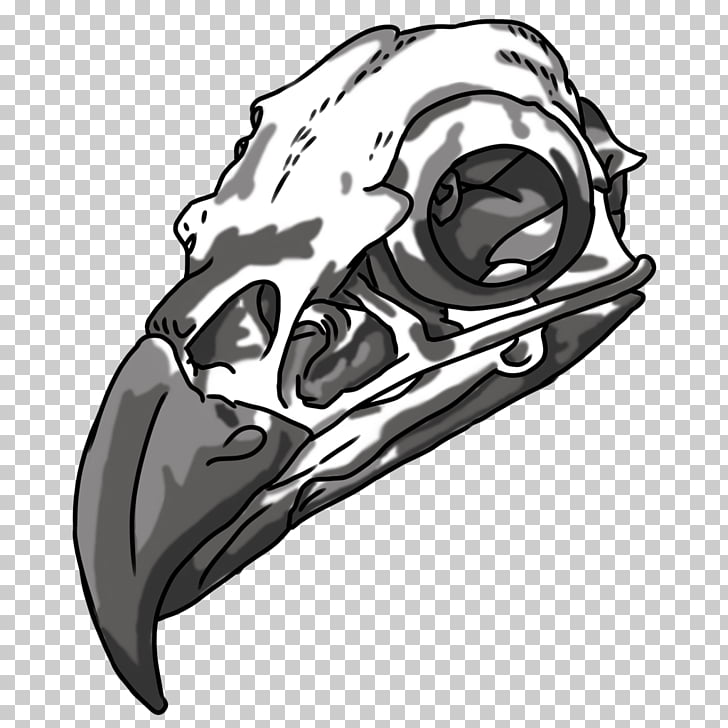 Drawing Bald Eagle Skull Bone, skull PNG clipart.