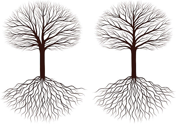 Bald Trees Clip Art, Vector Images & Illustrations.