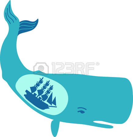 168 Baleen Whales Stock Vector Illustration And Royalty Free.