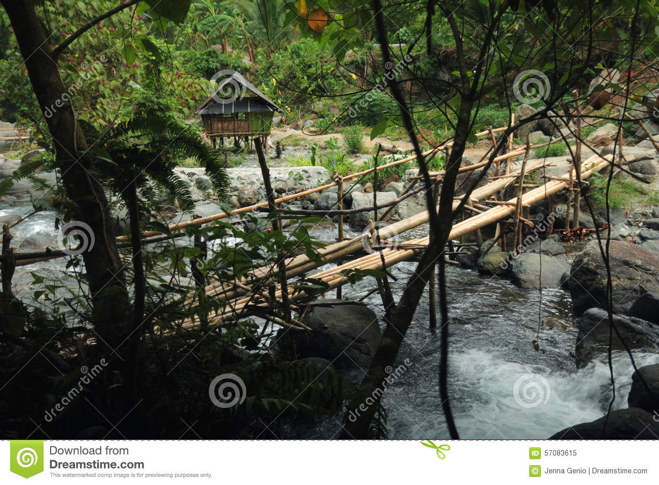 Bamboo Bridge In Jungle Stock Photo.