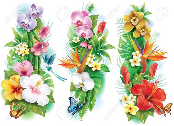 Arrangement De Fleurs Tropicales Et De Feuilles Clip Art Libres De.