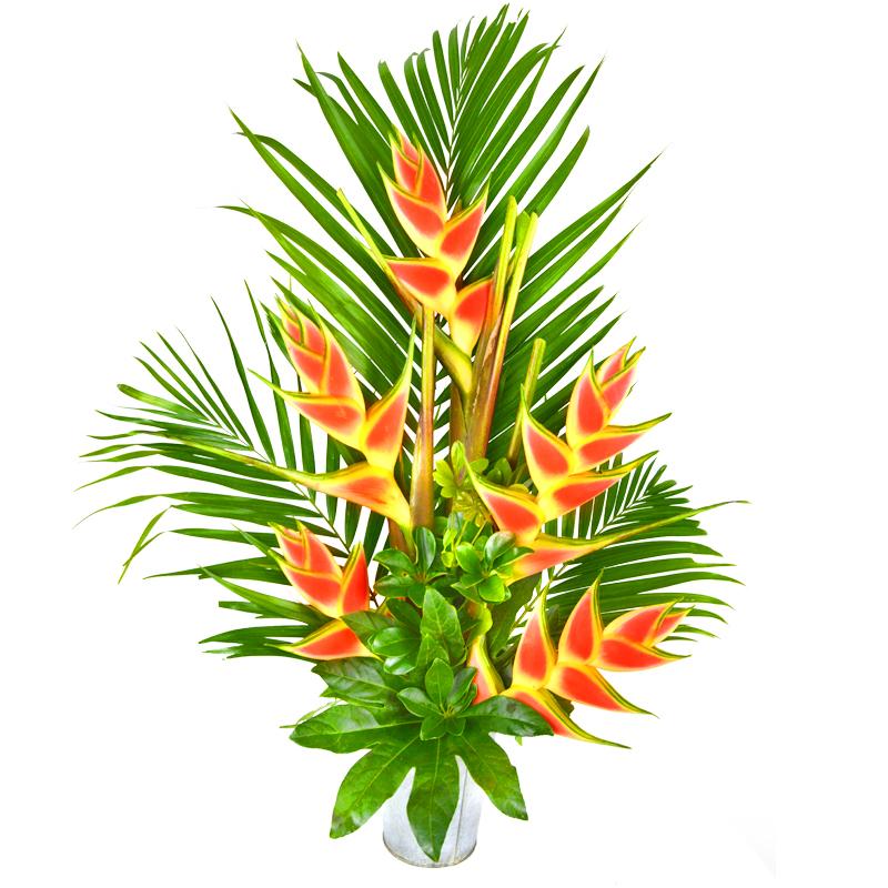 Index of /images/fleurs_vrac/colis_fleurs.