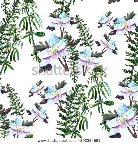 Anemone Windflower Stock Photos, Royalty.