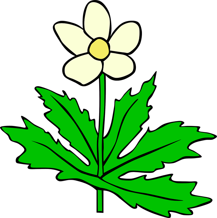 Free vector graphic: Anemone, Flower, Leaf, Plant, Bloom.