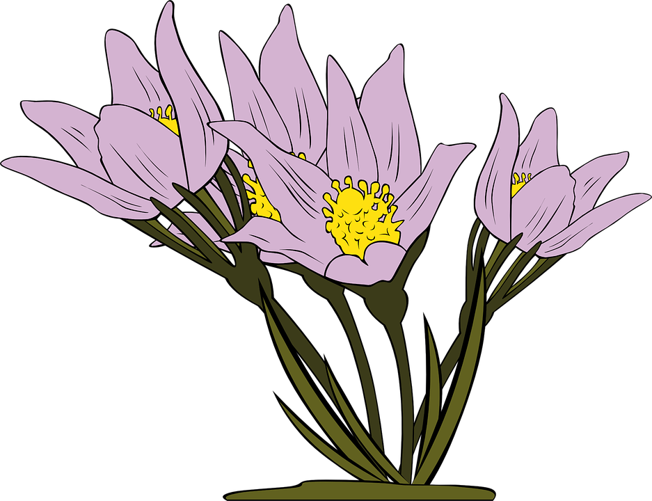 Free vector graphic: Anemone, Flowers, Purple, Floral.