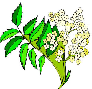 Cliparts Blumen.