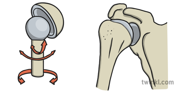 Ball and Socket Joint Illustration.