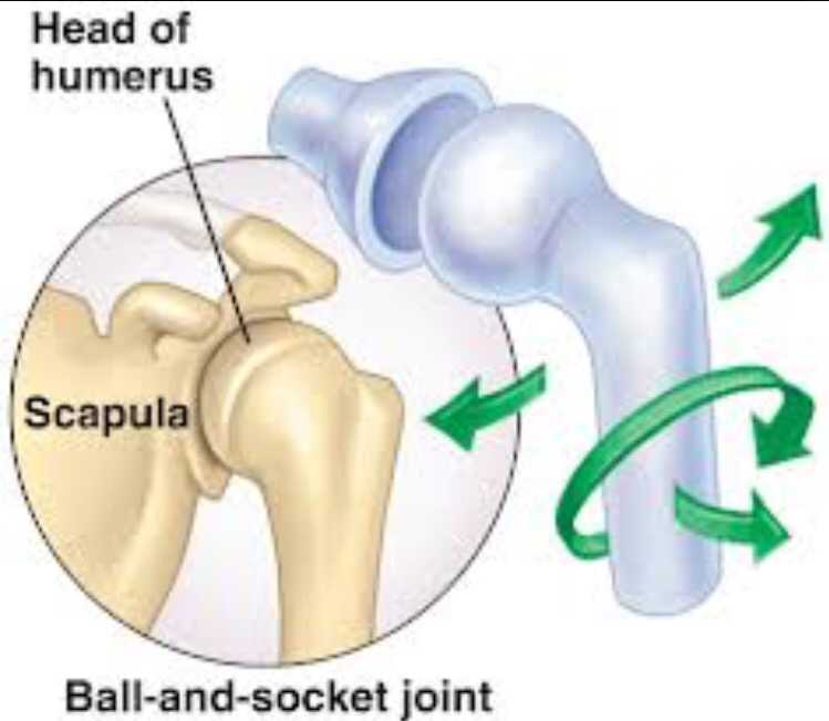 Ball And Socket Joint Clipart.
