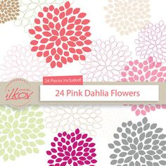 Ball dahlias clipart #12